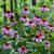 Растения, укрепляющие иммунитет ребенка