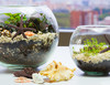 Как сделать мини-садик в аквариуме